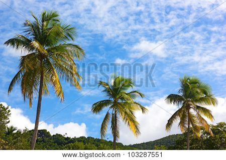 Three tall coconut palms against a cloudy blue sky.