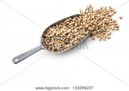uncooked beans in scoop on white background