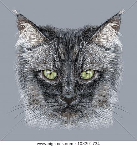 Illustration Portrait of Domestic cat