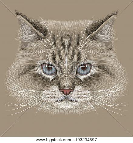 Illustrative Portrait of Siberian Cat