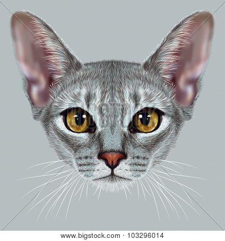 Illustrative Portrait of Abyssinian Cat
