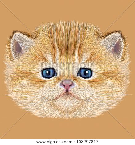 Illustrative Portrait of Domestic Kitten