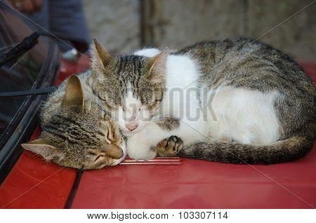 Two lovely cats  laying on the hood of car