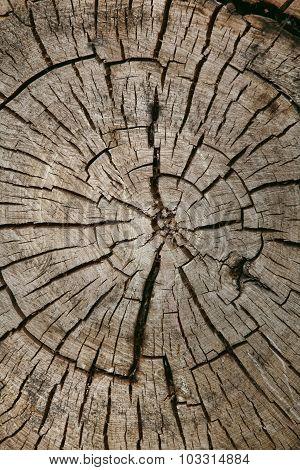 Tree Backgound