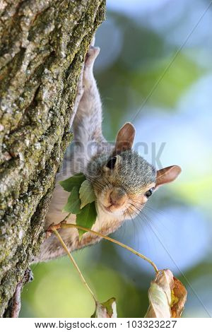 Squirrel & Leaves