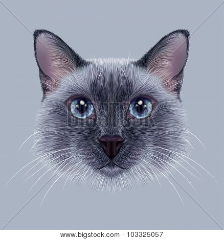 Illustrative Portrait of a Thai Cat