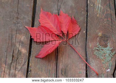 Autumn Leaves Vine