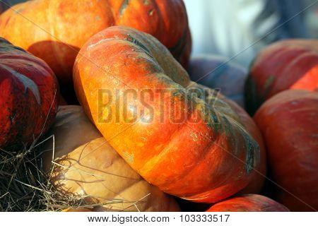Seasonal Pumpkin Background