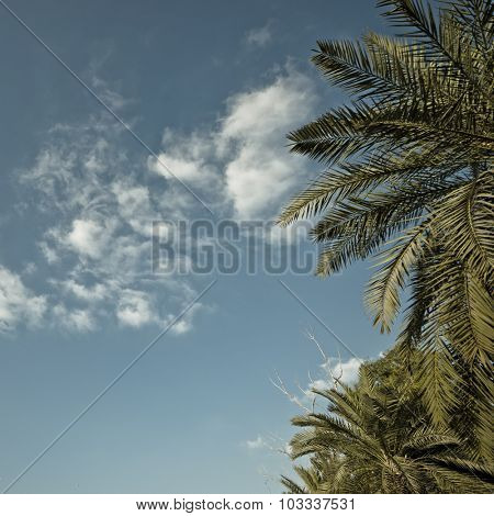 Partial view of a palm tree against clean blue sky. Nature background.