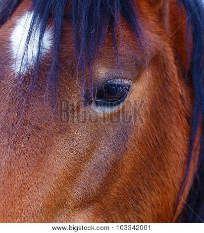 Close Up of a brown horse eye. On black background