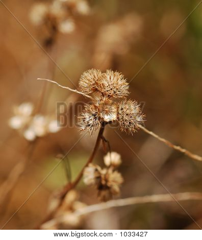 Dried Small Flowers