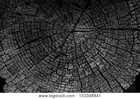 Tree Rings Old Weathered Wood Texture With The Cross Section Of A Cut Log Black And White