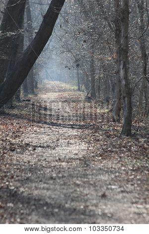 Dry Forest Path