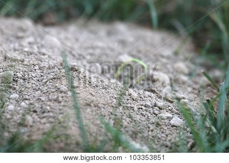 Cicada Killer Mound