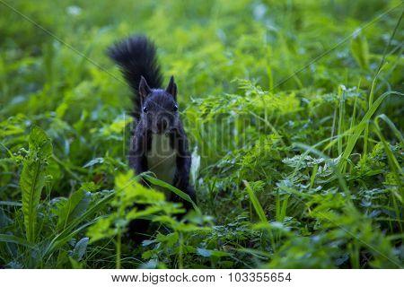 Squirrel At A Local Public Park
