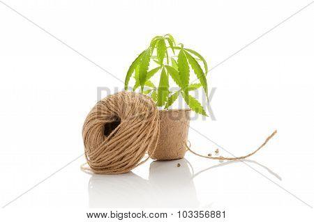 Hemp String.