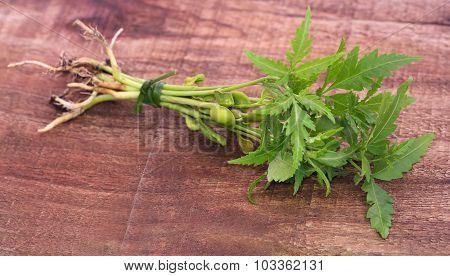 Bunch Of Neem Plant