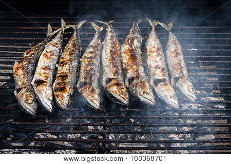 Mackerel Grilled
