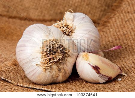 Two Heads Of Garlic And Garlic Clove On Sackcloth