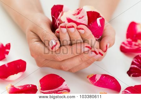 Female Hands With Nail Varnish Holding Rose Petals