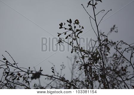 Cloudy Day: Leafless Tree