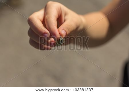 Children's Hand Holding A Butterfly By The Wings