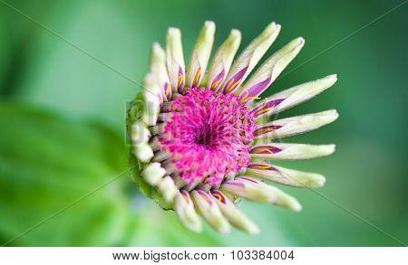 Macro flower isolated