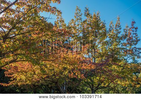 Fall Colors In Seatac