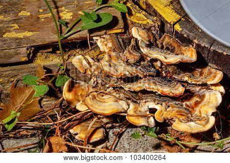 Mushrooms Growing On A Tree Trunk.