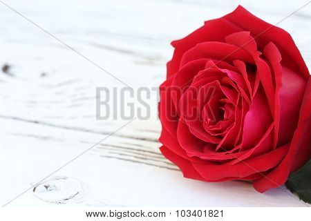 Red Rose Flower On White Wood Background