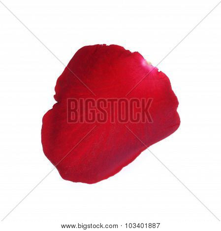 Petal Red Rose Flower Isolated On White Background