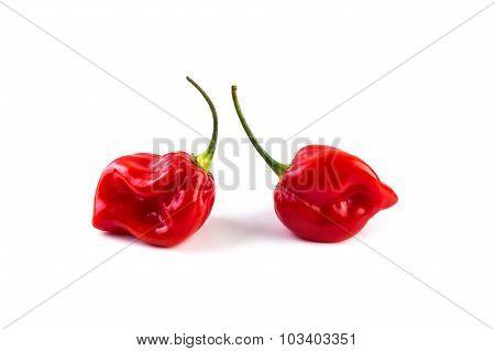Habanero Red On White Background