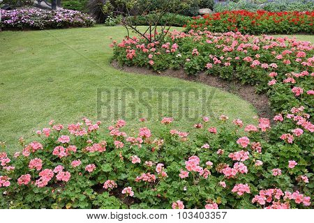 Pink Flowers In Green Grass Garden