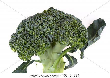 Green Broccoli Vegetable Isolated