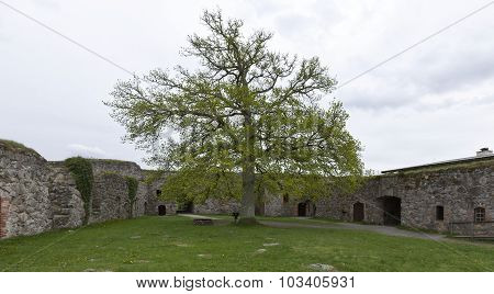 Yard and an oak inside the Kronobergs Castle, fortress.