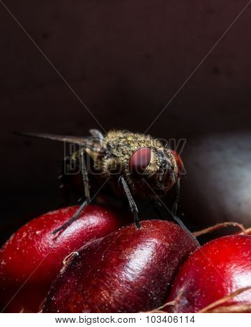 Fly With Red Eyes On Red Corn