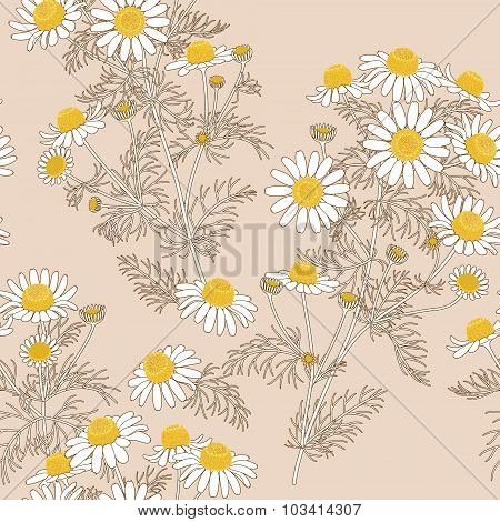 Chamomile Pattern On  Beige.