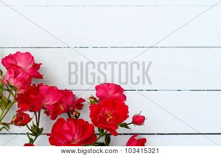Border of roses