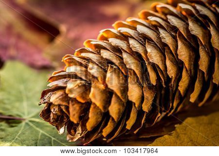 Autumn Background With Colored Leaves And Pinecone