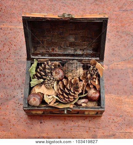 Pinecones In Chest With Raindrops