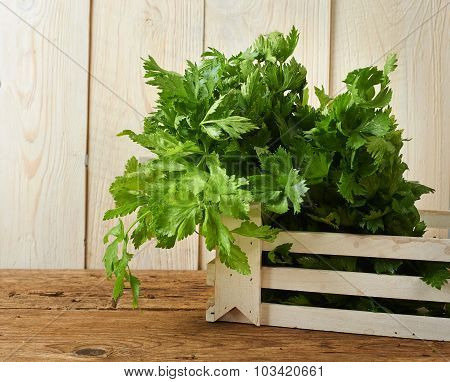 Bunches Of Fresh Celery On Wooden Bench