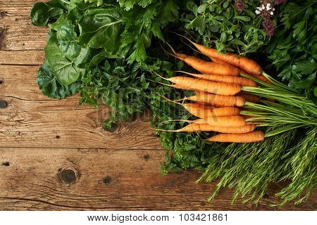 Many Bunches Of Fresh Herbs On Wooden Bench