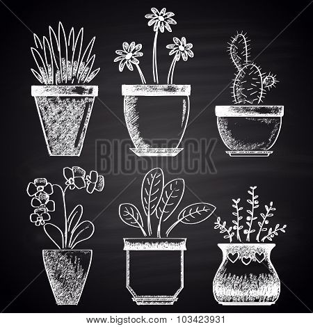 Chalk drawn set with different types of flowerpots (cactus, aloe, ficus, orchid, rosemary, chamomile