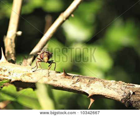 An Extreme Close Up Of A Hoverfly On A Tree Branch