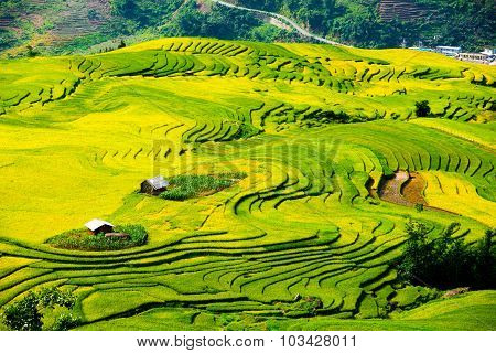 Beautiful terraced rice field in harvest season in Laocai, Vietnam.