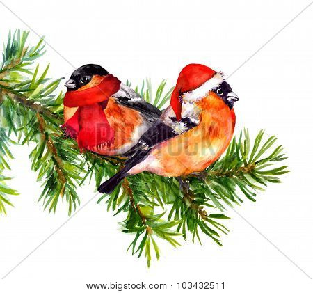 Two bullfinch birds in winter red santa hat and scarf on tree