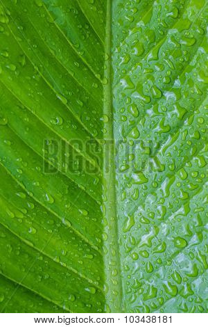 Close up green leaf with dewdrop