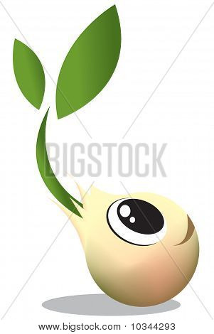 Young Seed