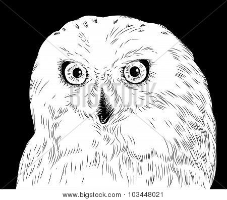 Owl made of Strokes