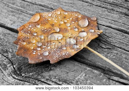 Autumn leaf drops